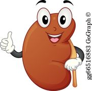 Kidney Clip Art - Royalty Free - GoGraph clip art freeuse stock