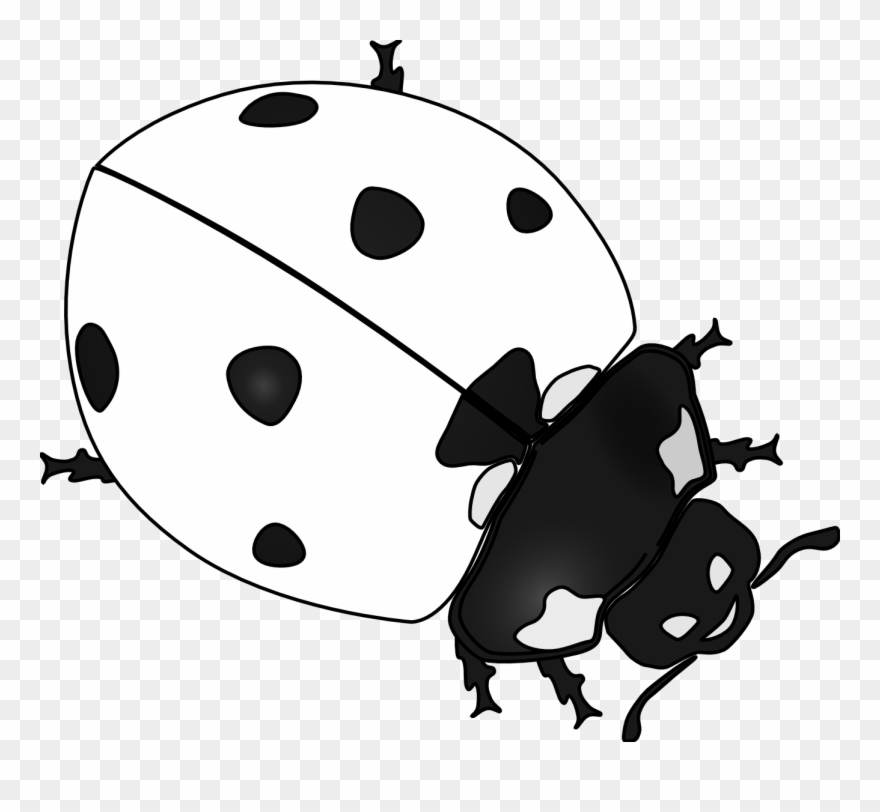 Free ladybug clipart downloads. Black and white png