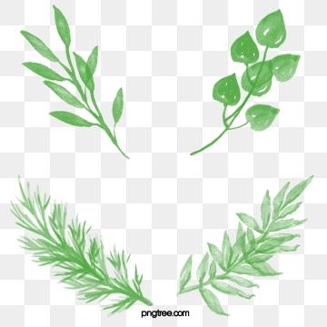 Download transparent png format. Free leaf images clipart