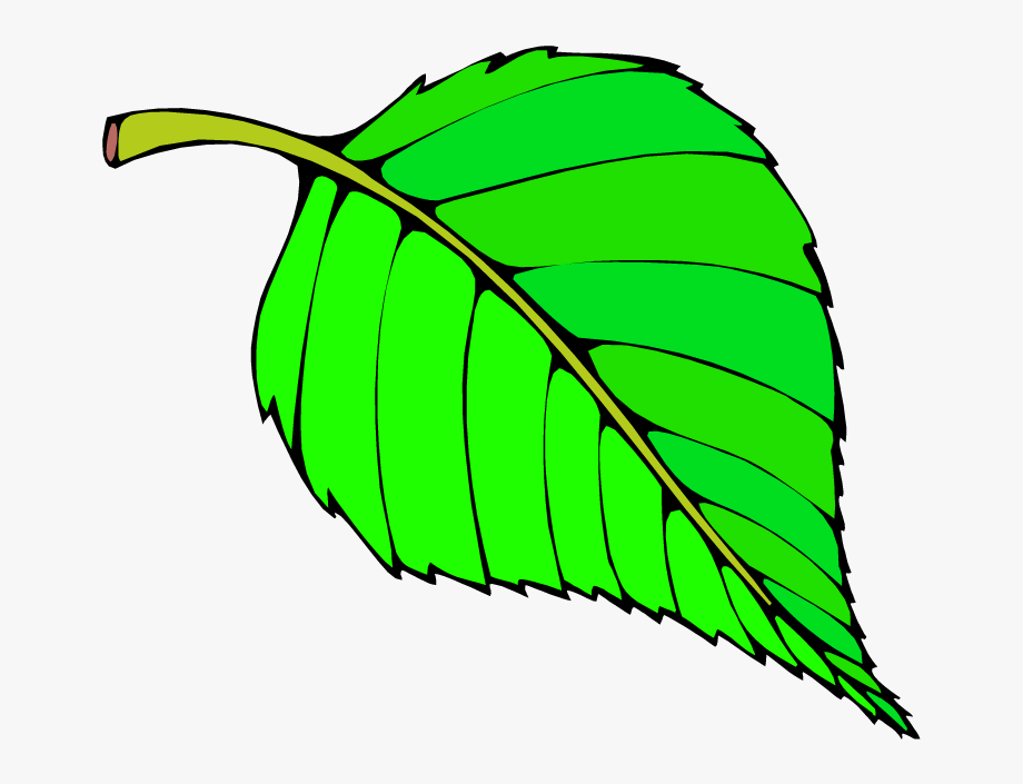 Free leaf images clipart. Big green colour objects