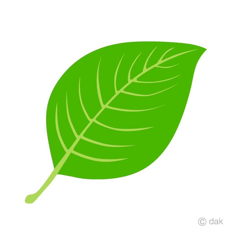 Simple picture illustoon . Free leaf images clipart