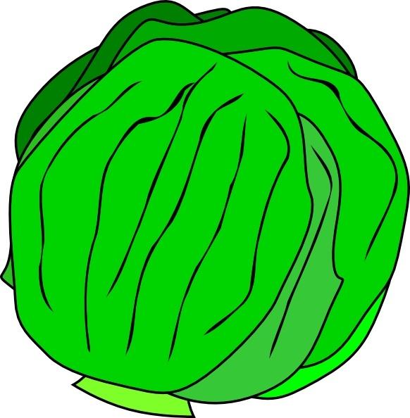 Whole clip art vector. Free lettuce clipart