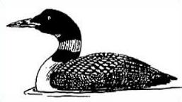 Free loon clipart. Common
