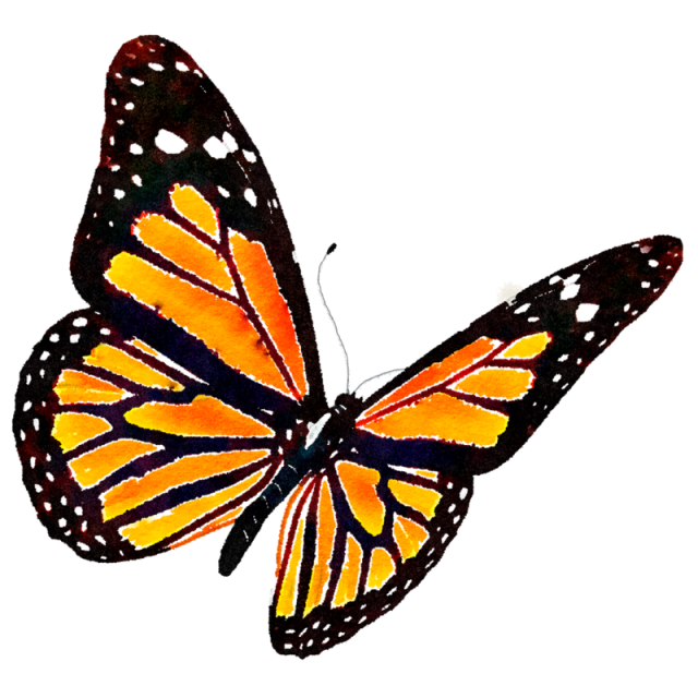Free monarch butterfly clipart