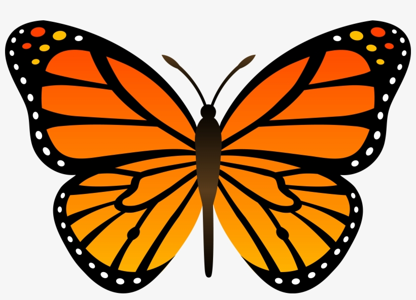 Free monarch butterfly clipart. Butterflies library com images