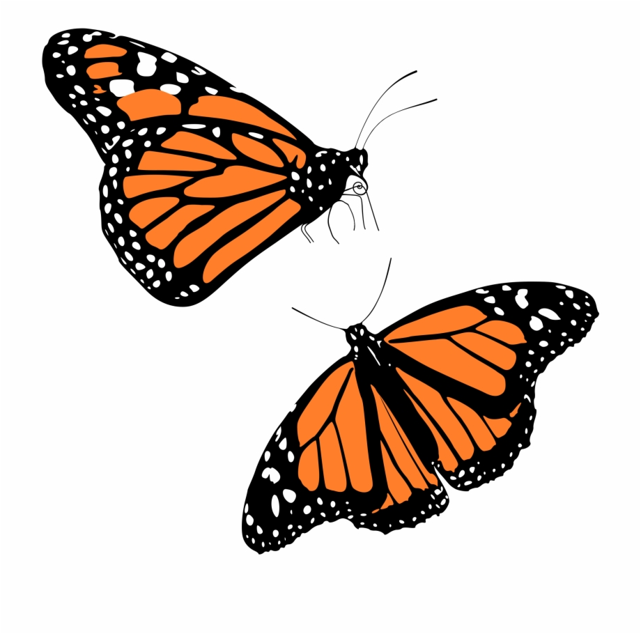 Free monarch butterfly clipart. Png transparent background