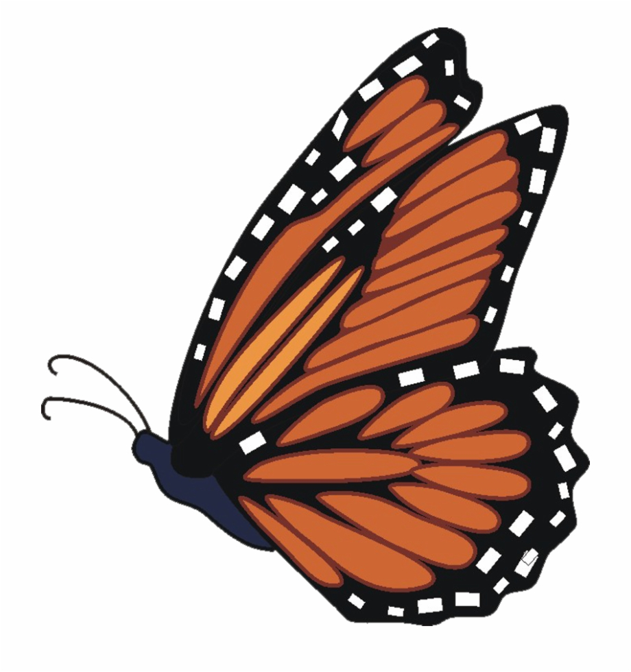 Transparent images download . Free monarch butterfly clipart