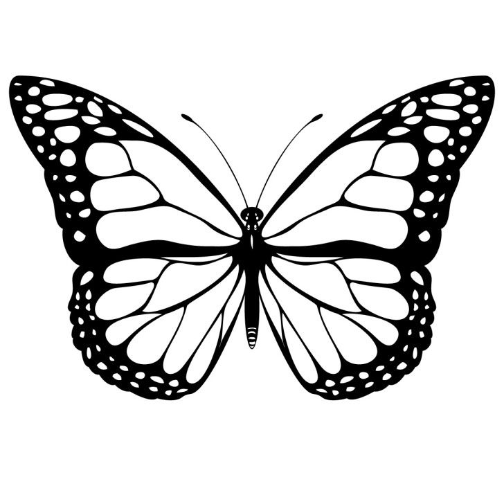 Clip art . Free monarch butterfly clipart
