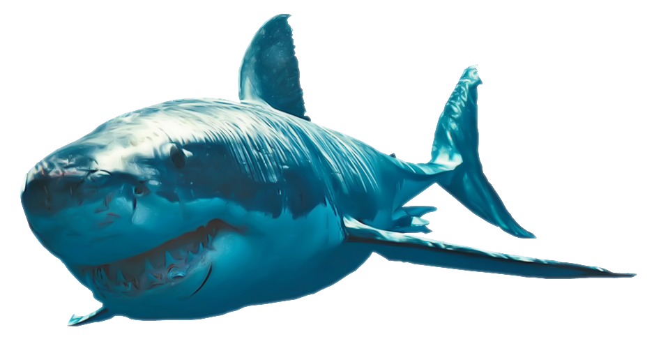Free money with a shark clipart picture transparent library Download Shark Clipart HQ PNG Image | FreePNGImg picture transparent library