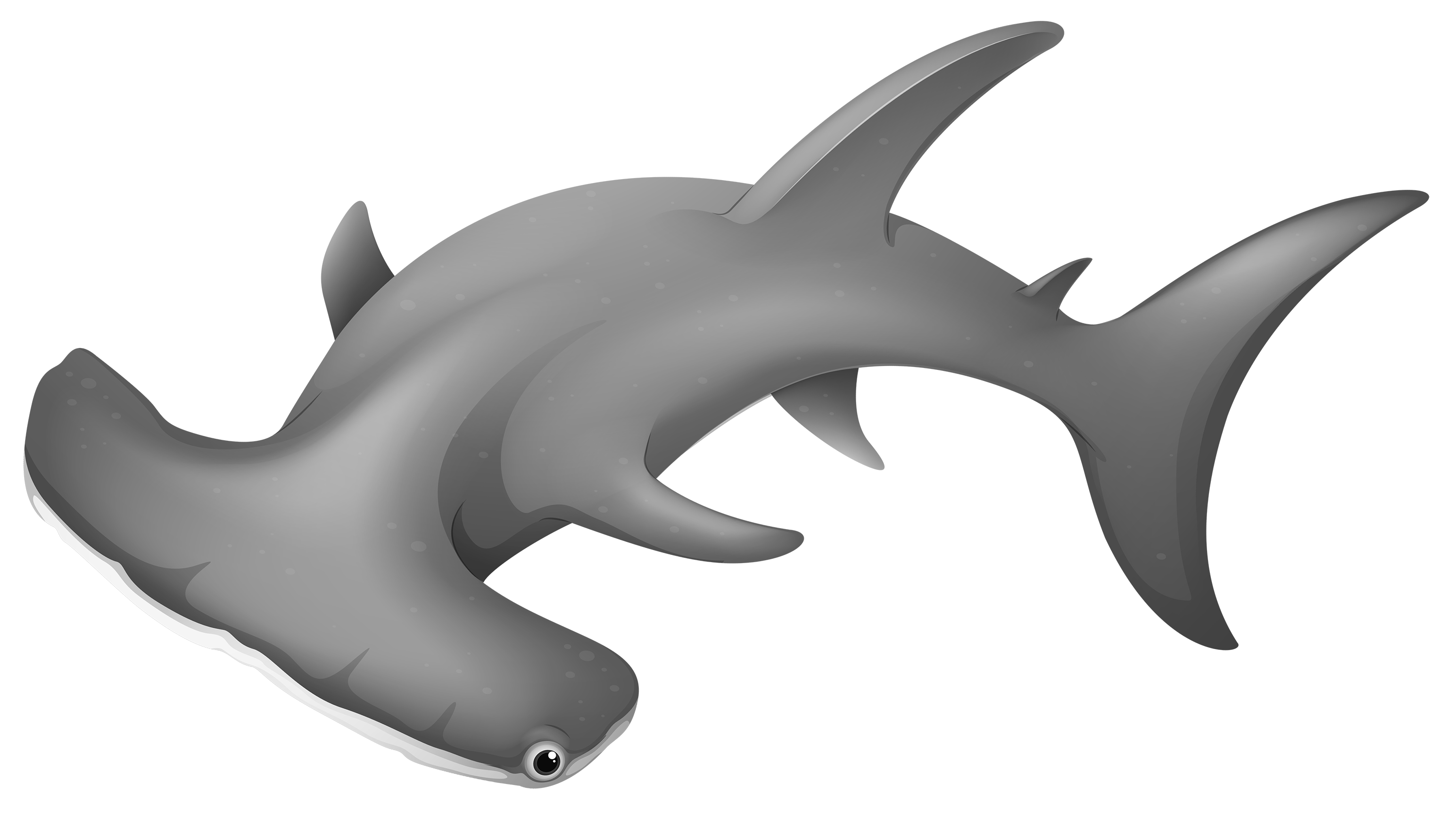 Free money with a shark clipart image free download HammerheadShark PNG Clipart - Best WEB Clipart image free download