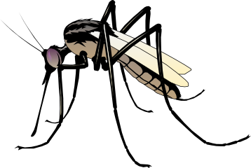 Mosquito clipart clipart royalty free library Free Mosquito Cliparts, Download Free Clip Art, Free Clip Art on ... clipart royalty free library