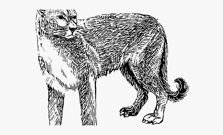 Mountain lion clipart black and white download Mountain Lion Clipart Black And White - Mountain Lion Black And ... download