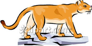 Free mountain lion clipart png freeuse download Mountain Lion Cub Walking Over Flat Rocks - Royalty Free Clipart Picture png freeuse download
