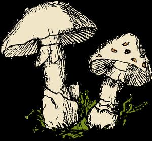 Free mushroom clipart clip art stock 311 morel mushroom clip art free images | Public domain vectors clip art stock