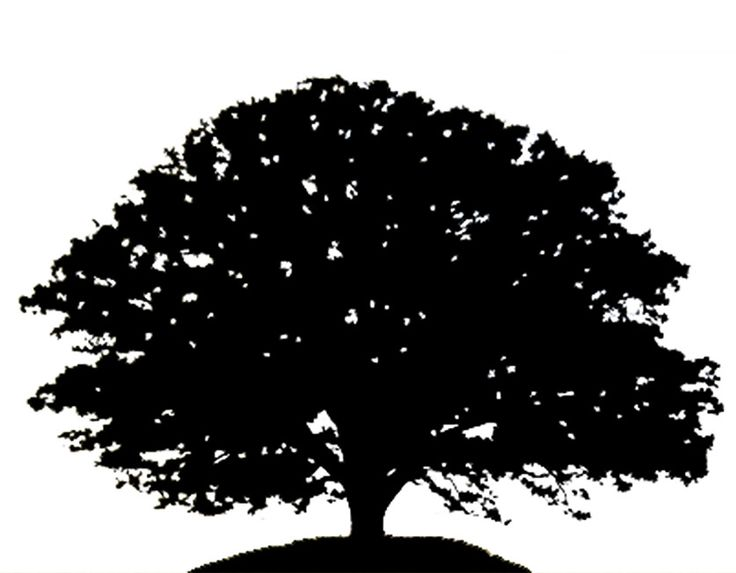 Red oak tree clipart png freeuse Oak Tree Silhouette Png (+) - Free Download | fourjay.org png freeuse