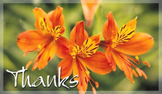 Free online flowers pictures clipart royalty free library Free Orange Flowers eCard - eMail Free Personalized Thank You ... clipart royalty free library