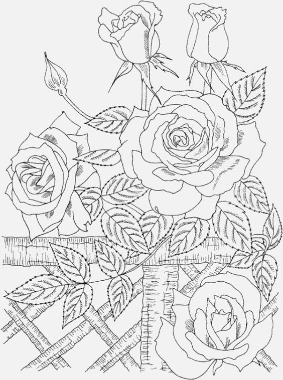 Free online pictures of flowers graphic transparent stock adult coloring pages free to print | Nature Beauty Coloring Pages ... graphic transparent stock