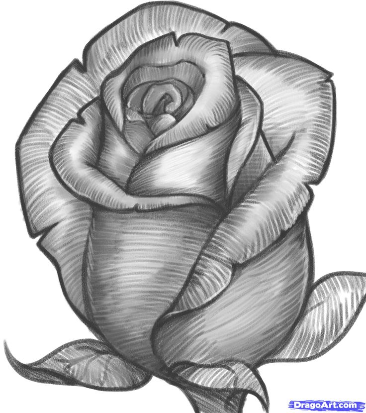 Free online pictures of flowers graphic library stock 17 Best ideas about Flowers To Draw on Pinterest | How to draw ... graphic library stock