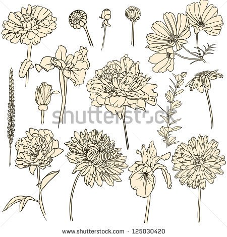 Free online pictures of flowers image freeuse stock drawn flowers hand drawn flowers stock photos royalty free images ... image freeuse stock
