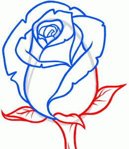 Free online pictures of flowers clip transparent download How to Draw a Rose Bud, Rose Bud, Step by Step, Flowers, Pop ... clip transparent download