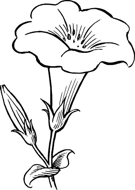 Free outline pictures of flowers graphic transparent library black, outline, drawing, flower, white, flowers, free | Drawing ... graphic transparent library