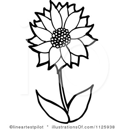 Free outline pictures of flowers transparent stock 17 Best images about Flower Outlines on Pinterest | Coloring, The ... transparent stock