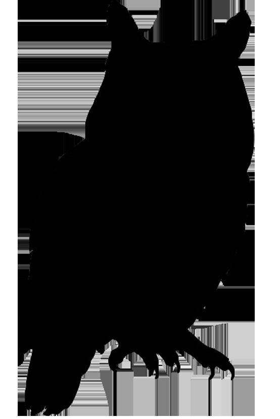 Free owl silhouette clipart jpg freeuse stock Owl Bird Silhouette Clip art - silhouettes png download - 554*827 ... jpg freeuse stock