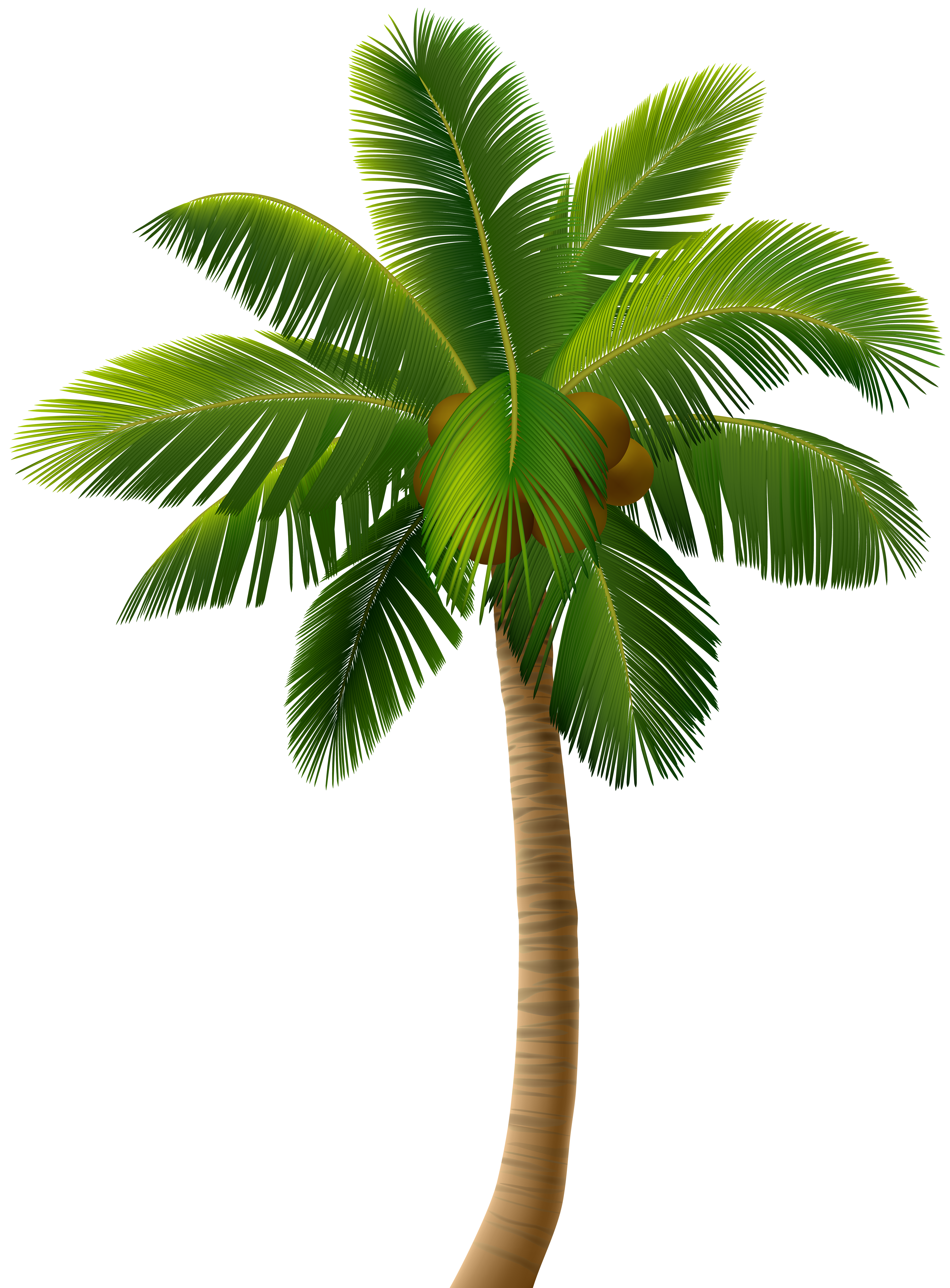 Palm tree border clipart clip art Palm Tree PNG Clip Art Image | Gallery Yopriceville - High-Quality ... clip art
