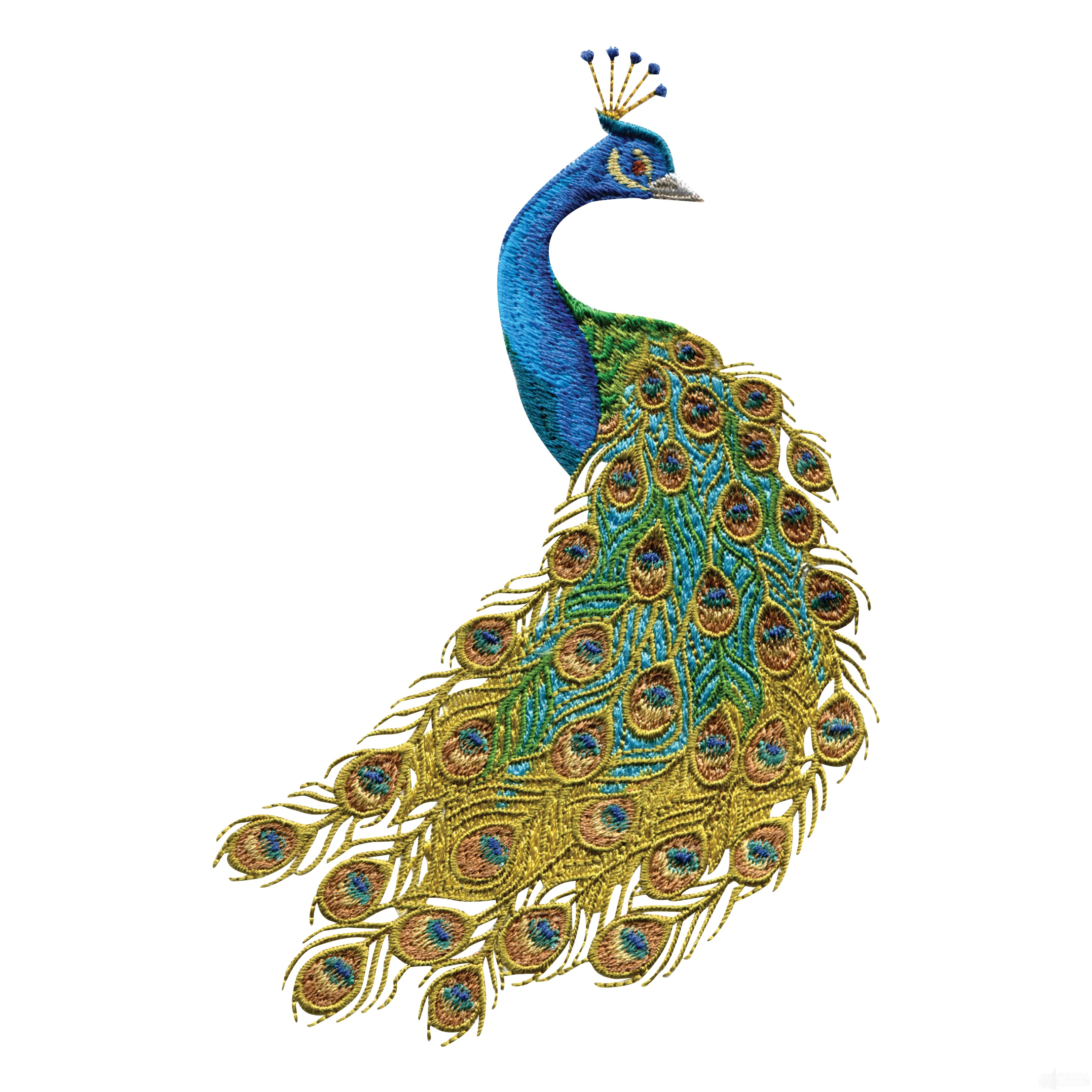 Free peacock clipart vector transparent library Free Peacock Clipart | Free download best Free Peacock Clipart on ... vector transparent library