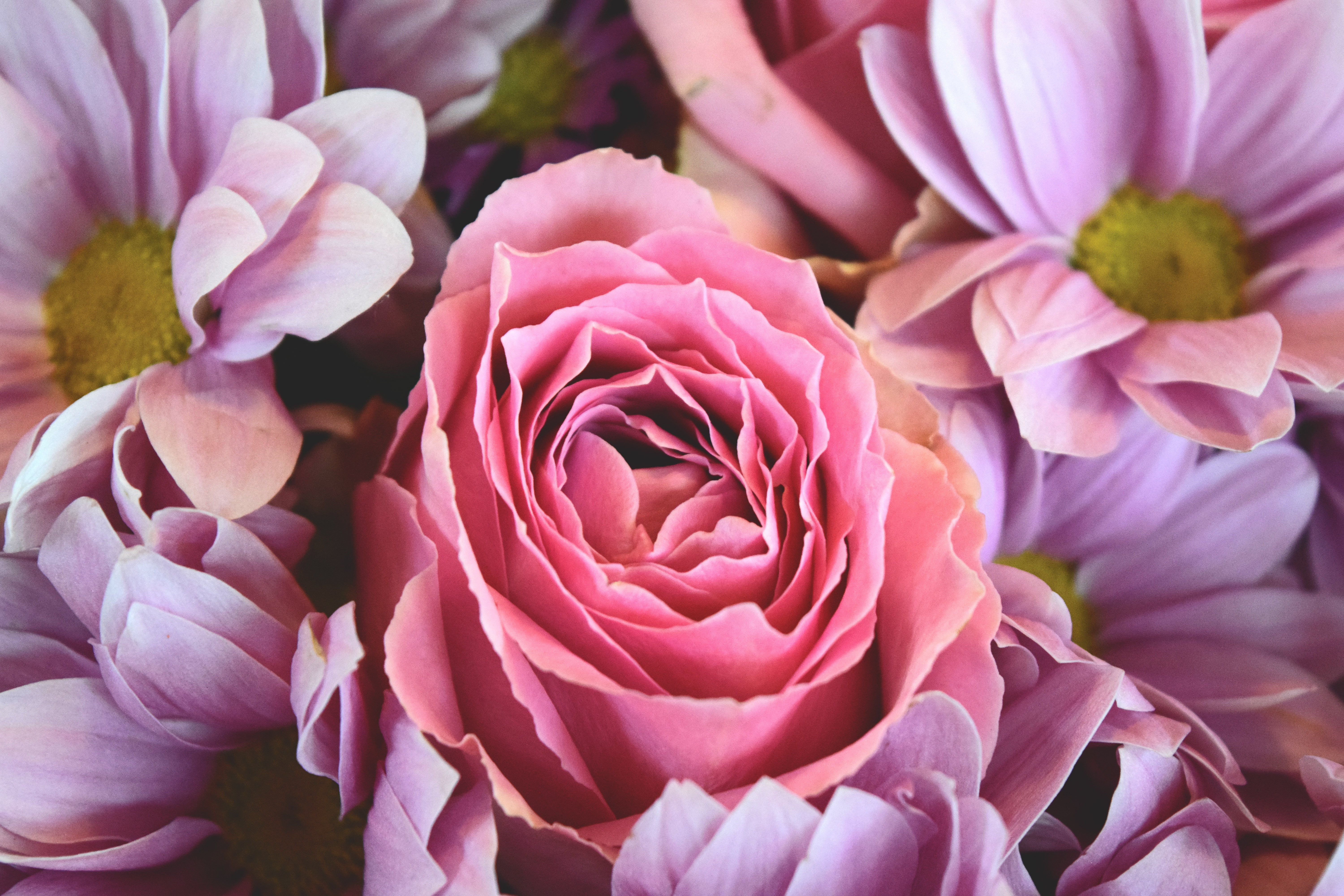 Free photos of flowers roses jpg Free stock photo of flowers, pink, roses jpg