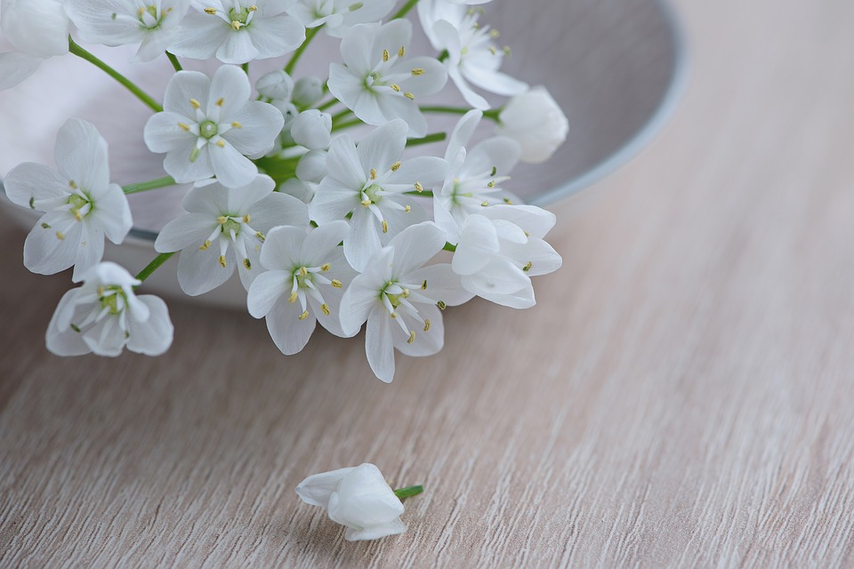 Free photos of white flowers clipart stock Free photo: Flower, Flowers, White - Free Image on Pixabay - 1307354 clipart stock