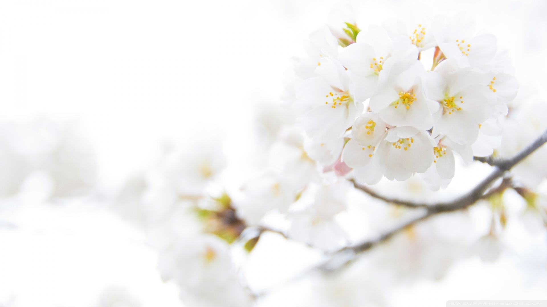 Free photos of white flowers png free library 17 Best ideas about White Flower Wallpaper on Pinterest | White ... png free library