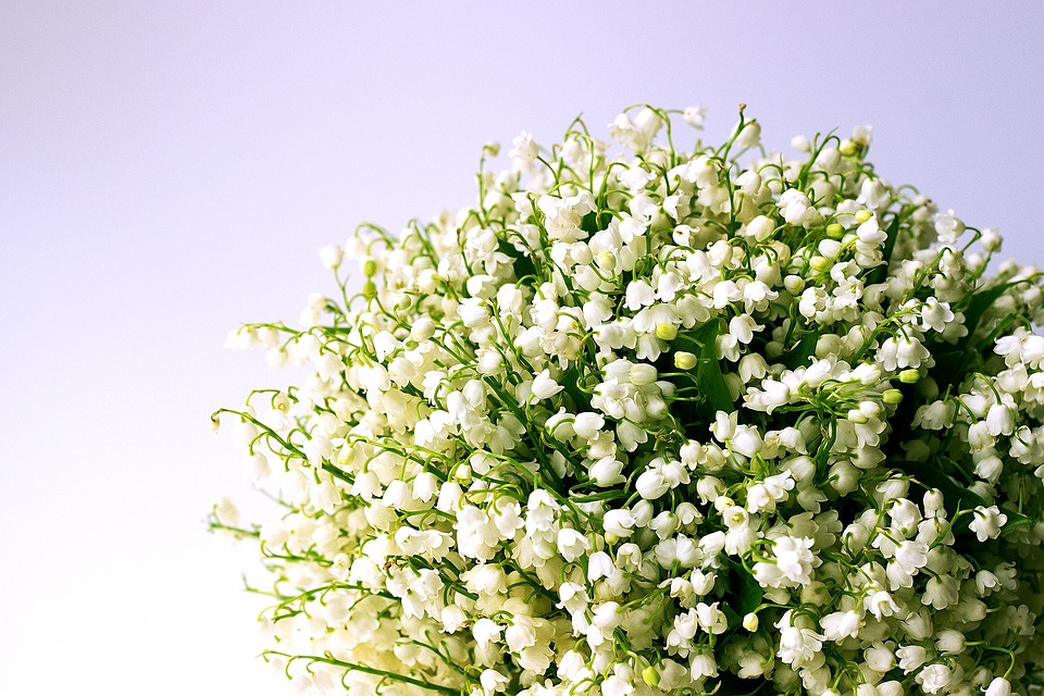 Free photos of white flowers vector Free photo White Flowers Spring Lily Of The Valley - Max Pixel vector