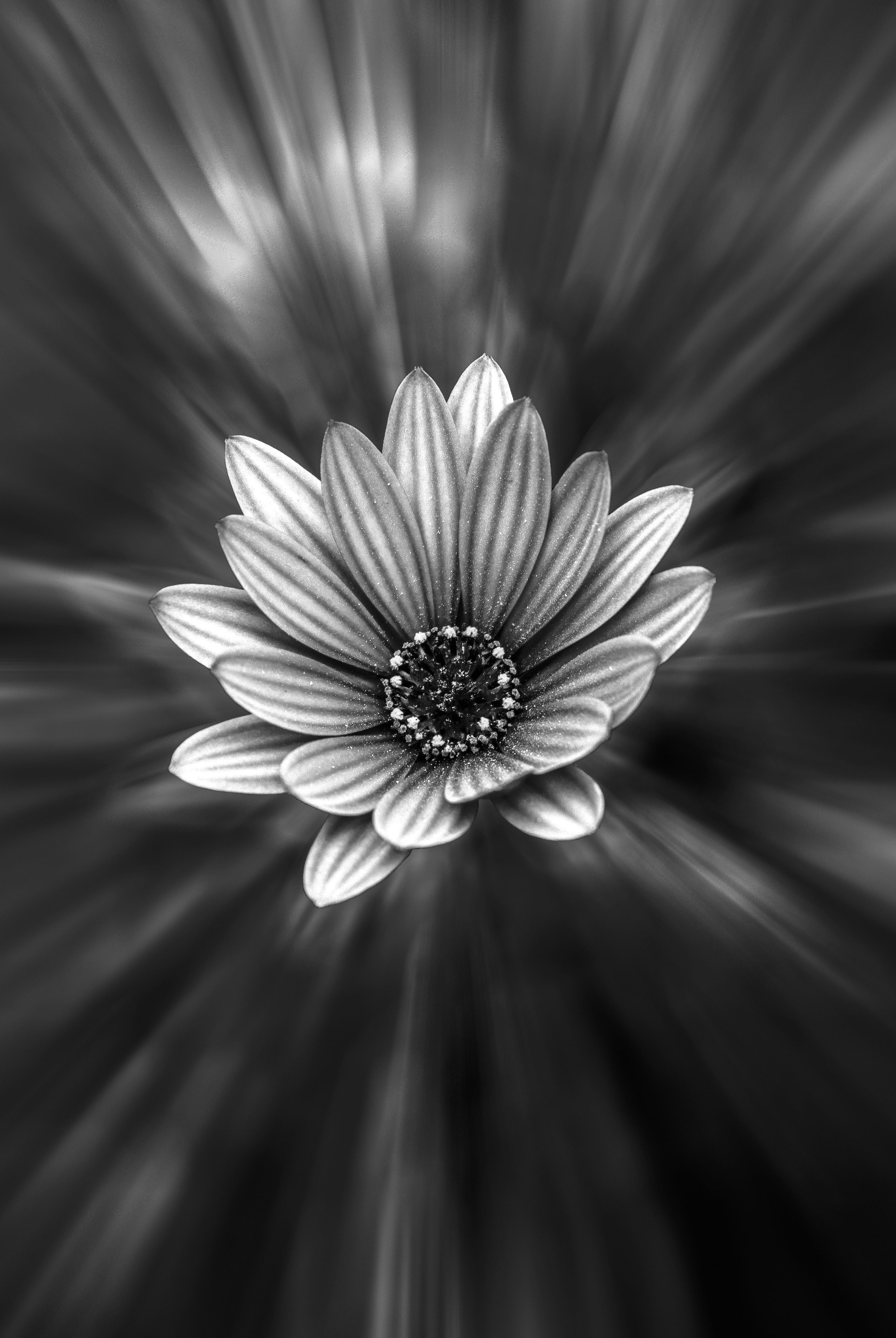 Free photos of white flowers banner transparent Free stock photo of black-and-white, blossom, flower banner transparent