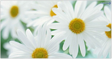 Free photos of white flowers