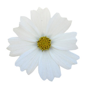 Free photos of white flowers banner black and white Free stock photos - Rgbstock -Free stock images | White flower ... banner black and white