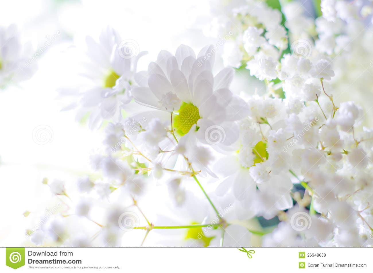 Free photos of white flowers png freeuse stock White Flowers Royalty Free Stock Photos - Image: 26348658 png freeuse stock