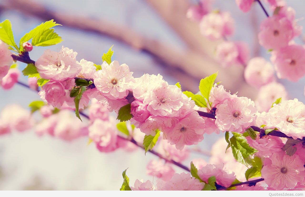 Free photos spring flowers banner transparent stock Free photos spring flowers - ClipartFest banner transparent stock