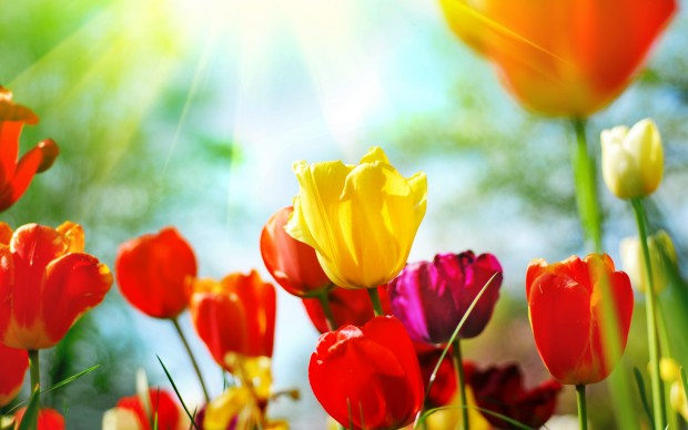 Free photos spring flowers banner free Spring Flowers Wallpapers Free Download | HD Wallpapers, Gifs ... banner free