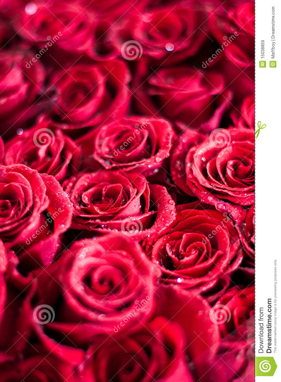 Free picture of bouquet of flowers banner stock Bouquet Of Roses Royalty Free Stock Images - Image: 15038859 banner stock