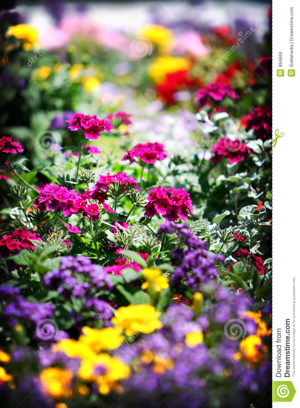Free picture of flowers clip royalty free download Flower Bed Royalty Free Stock Images - Image: 894669 clip royalty free download