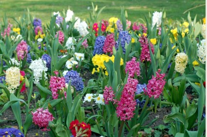 Free picture of spring flowers royalty free Spring Flowers Wallpapers Free Download - 48+ Nice Photos royalty free