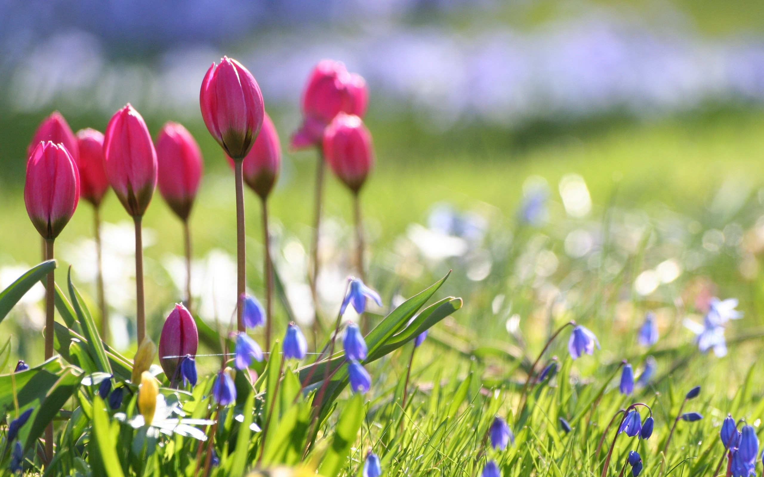 Free picture of spring flowers clip art library library Hd Pc Spring Flowers Wallpapers Download clip art library library