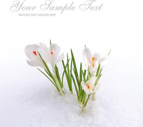 Free picture of spring flowers banner library library Spring flower images free stock photos download (13,377 Free stock ... banner library library
