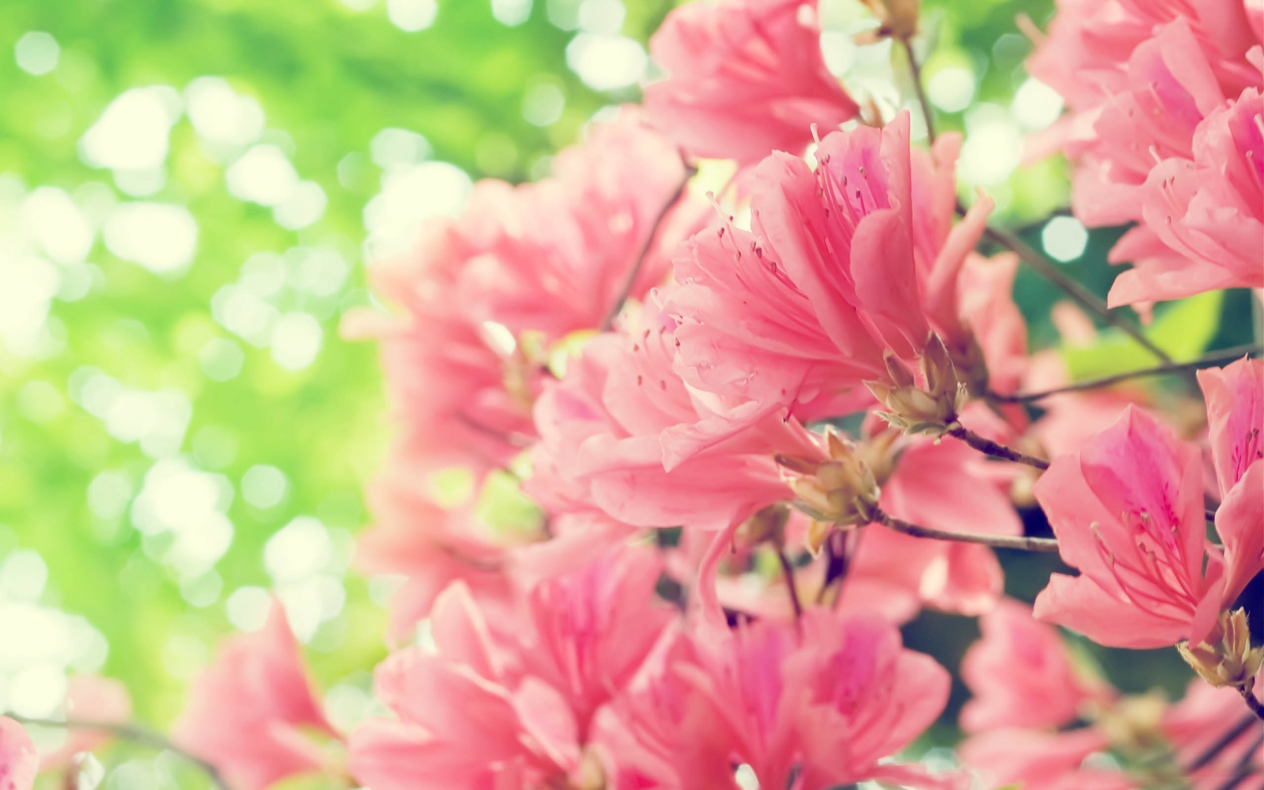 Free picture of spring flowers vector free library Spring Flowers Wallpapers High Resolution - Zuhurtv.com vector free library