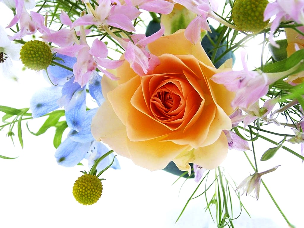Free pictures flowers png royalty free download Free flower pics - ClipartFest png royalty free download