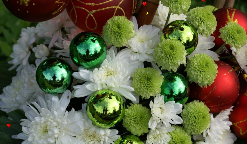 Free pictures of christmas flowers graphic free Christmas Flower Bulb Free Wallpaper | I HD Images graphic free