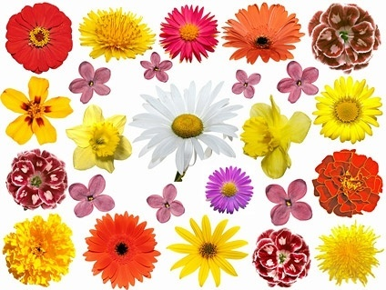 Free pictures of colorful flowers svg freeuse stock Colorful flower images free stock photos download (15,608 Free ... svg freeuse stock