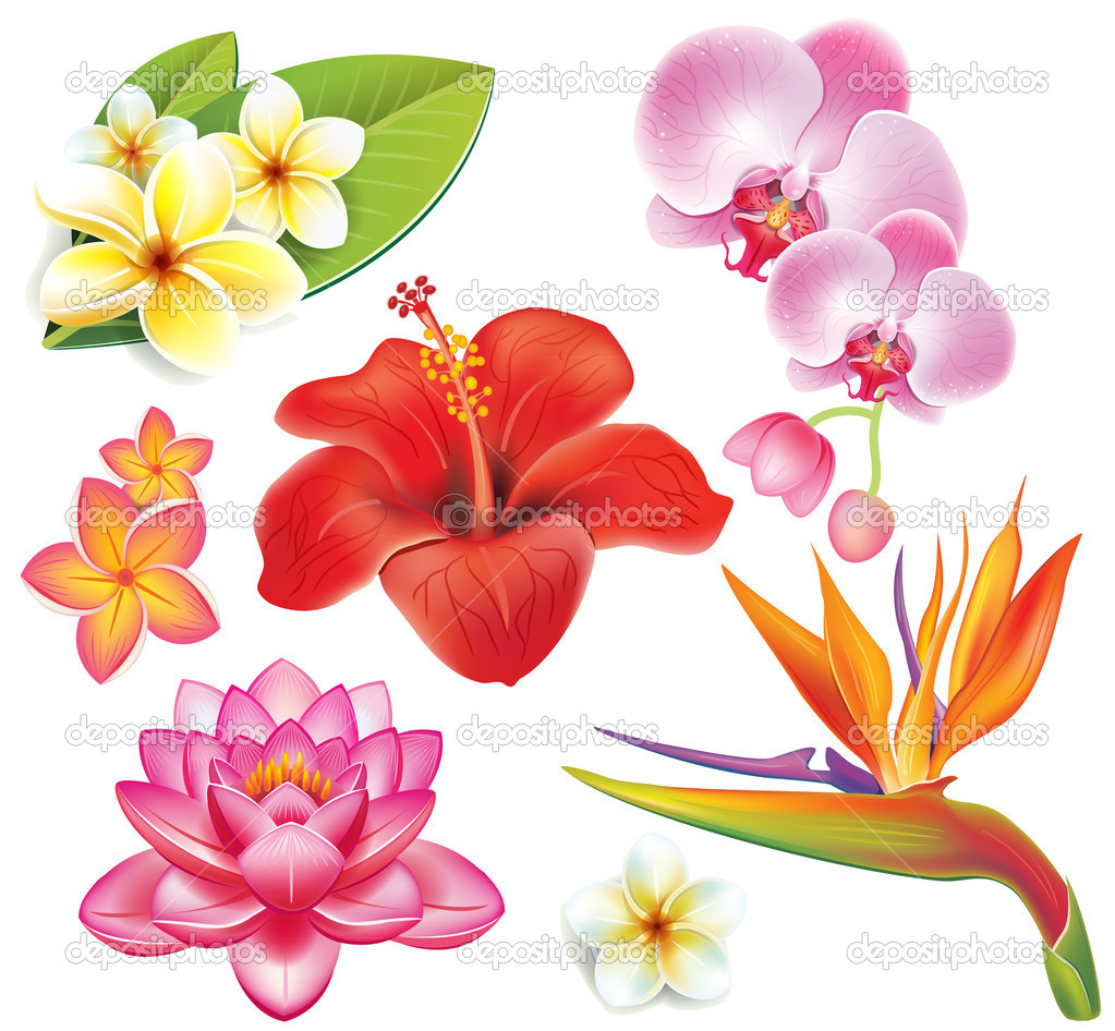 Free pictures of exotic flowers clip art library stock Free pictures of tropical flowers - ClipartFest clip art library stock