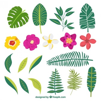Free pictures of exotic flowers image transparent stock Tropical Flowers Vectors, Photos and PSD files | Free Download image transparent stock